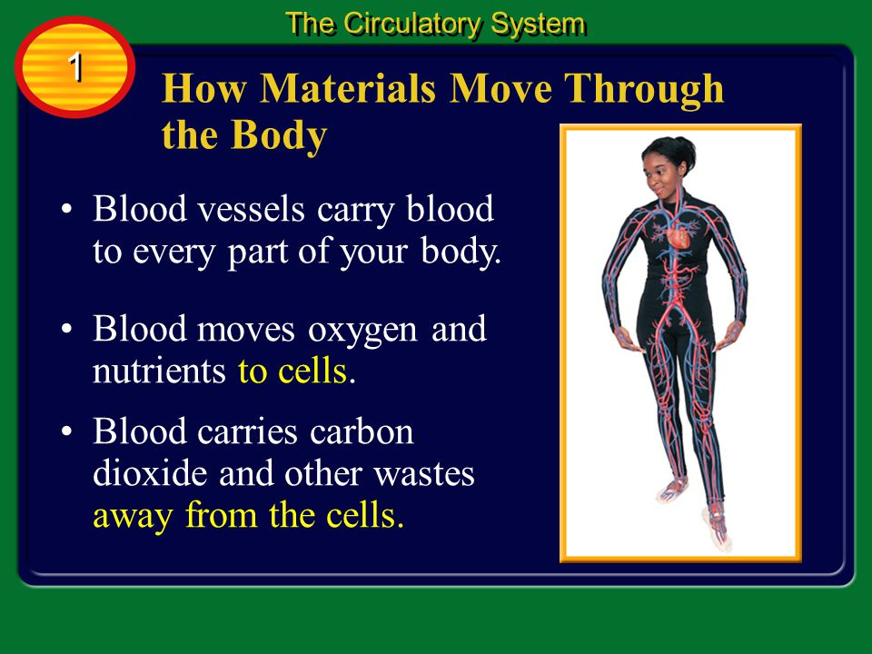 How Materials Move Through the Body