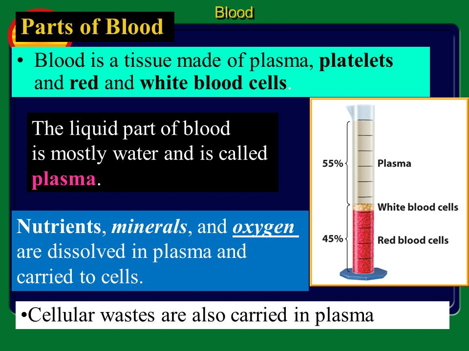 Blood Parts of Blood. Blood is a tissue made of plasma, platelets and red and white blood cells. The liquid part of blood.