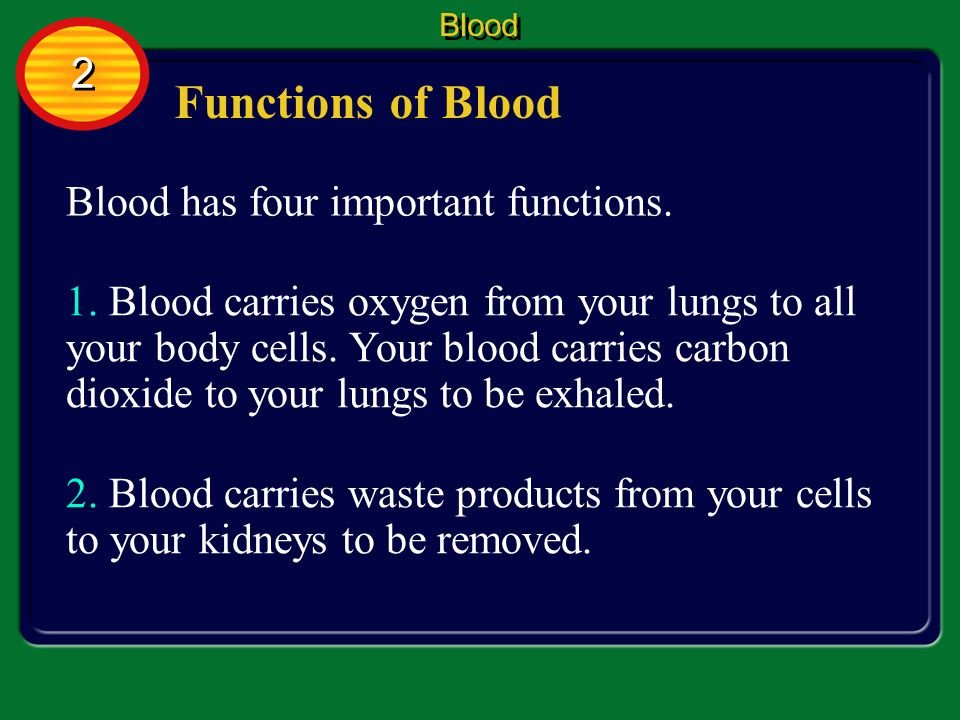 Functions of Blood 2 Blood has four important functions.