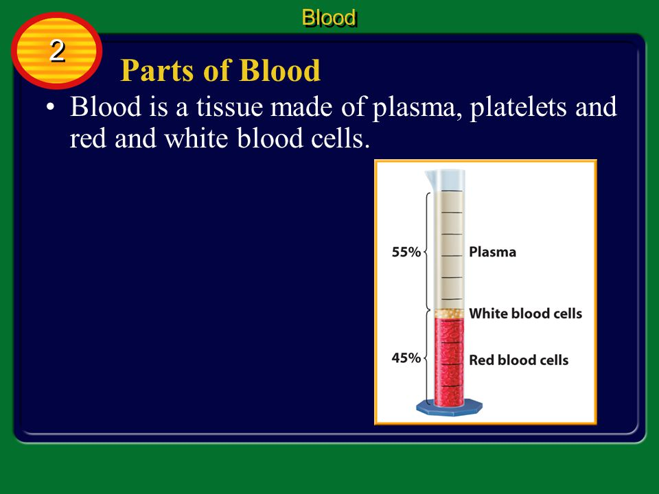 Blood 2 Parts of Blood Blood is a tissue made of plasma, platelets and red and white blood cells.