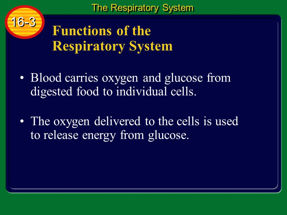 Functions of the Respiratory System