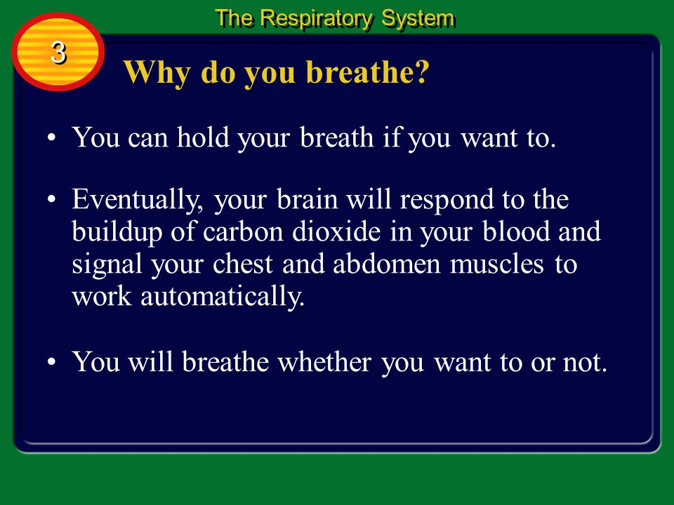 Why do you breathe 3 You can hold your breath if you want to.