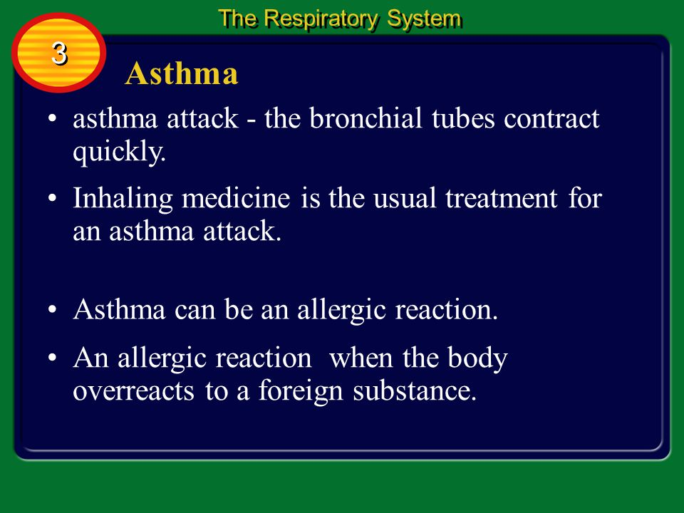 Asthma 3 asthma attack - the bronchial tubes contract quickly.