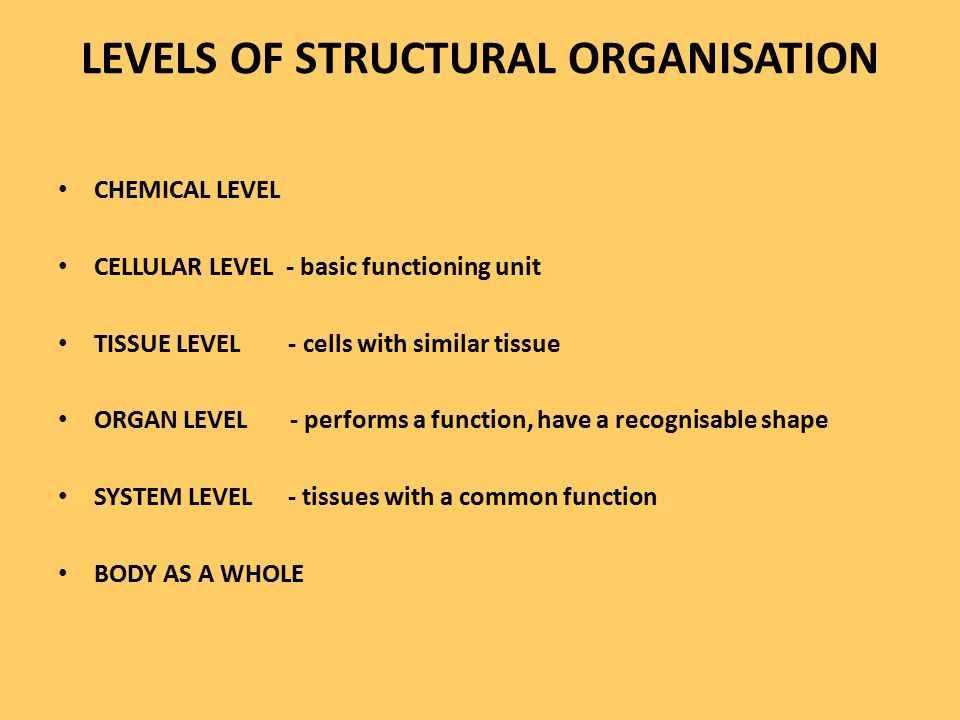 LEVELS OF STRUCTURAL ORGANISATION