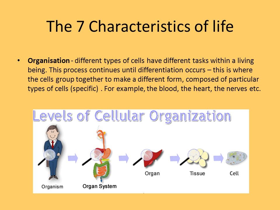 What are the seven characteristics of life?