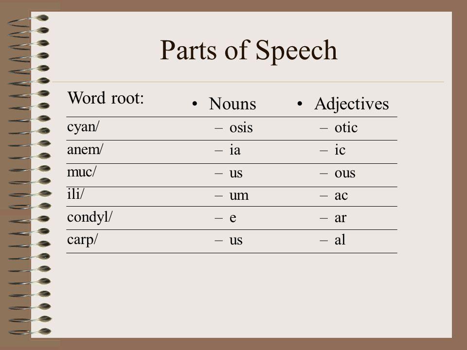 Parts of Speech Word root: Nouns Adjectives cyan/ anem/ muc/ ili/