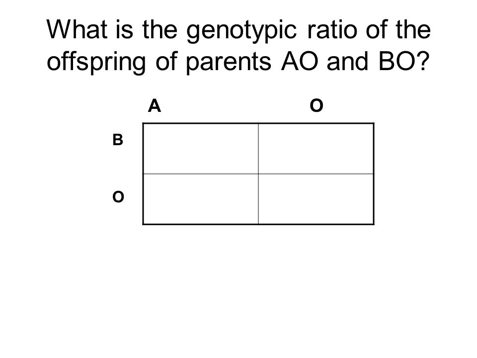 What is the genotypic ratio of the offspring of parents AO and BO
