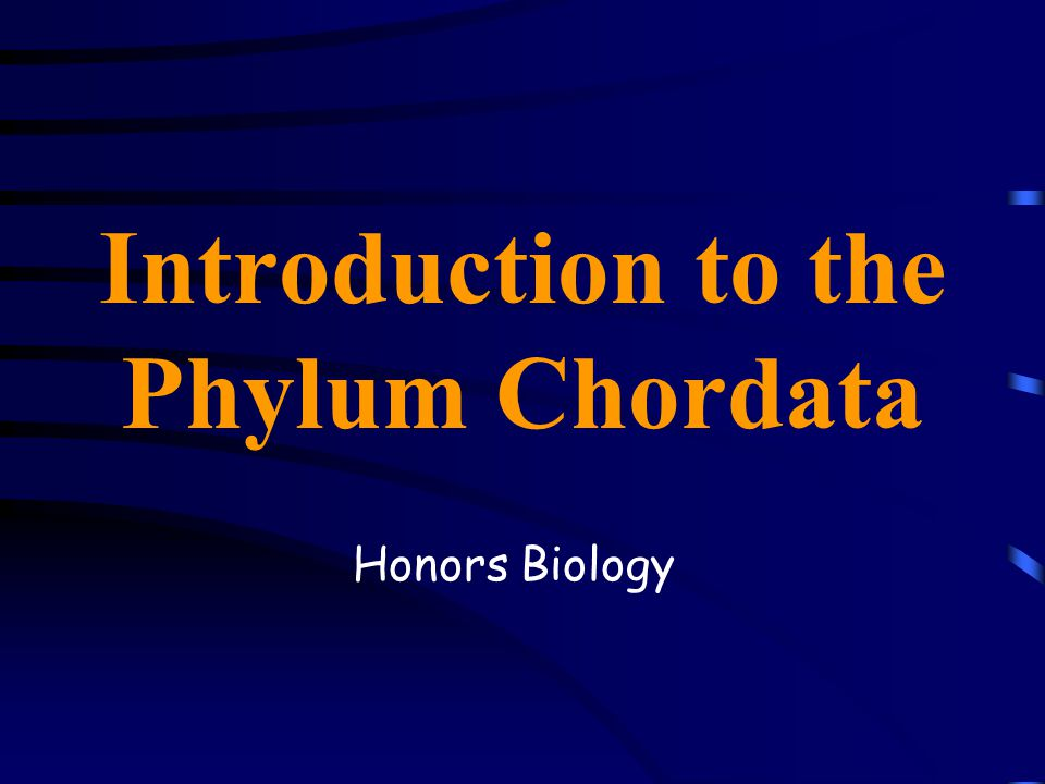 Introduction to the Phylum Chordata