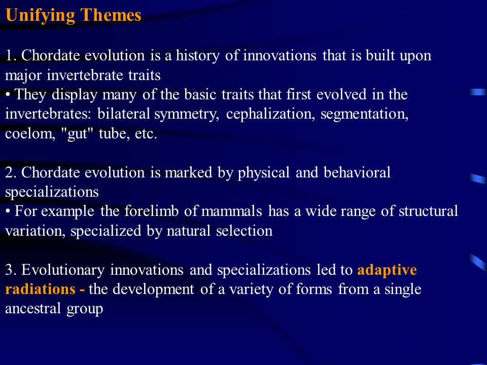 Unifying Themes 1. Chordate evolution is a history of innovations that is built upon major invertebrate traits.