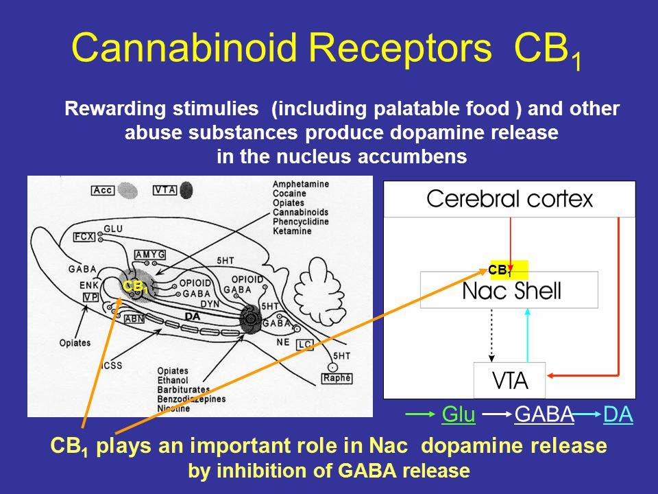 Cannabinoid Receptors CB1