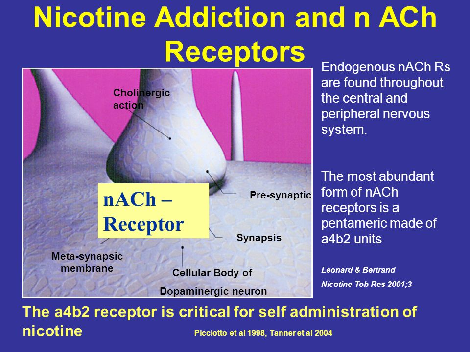 Nicotine Addiction and n ACh Receptors