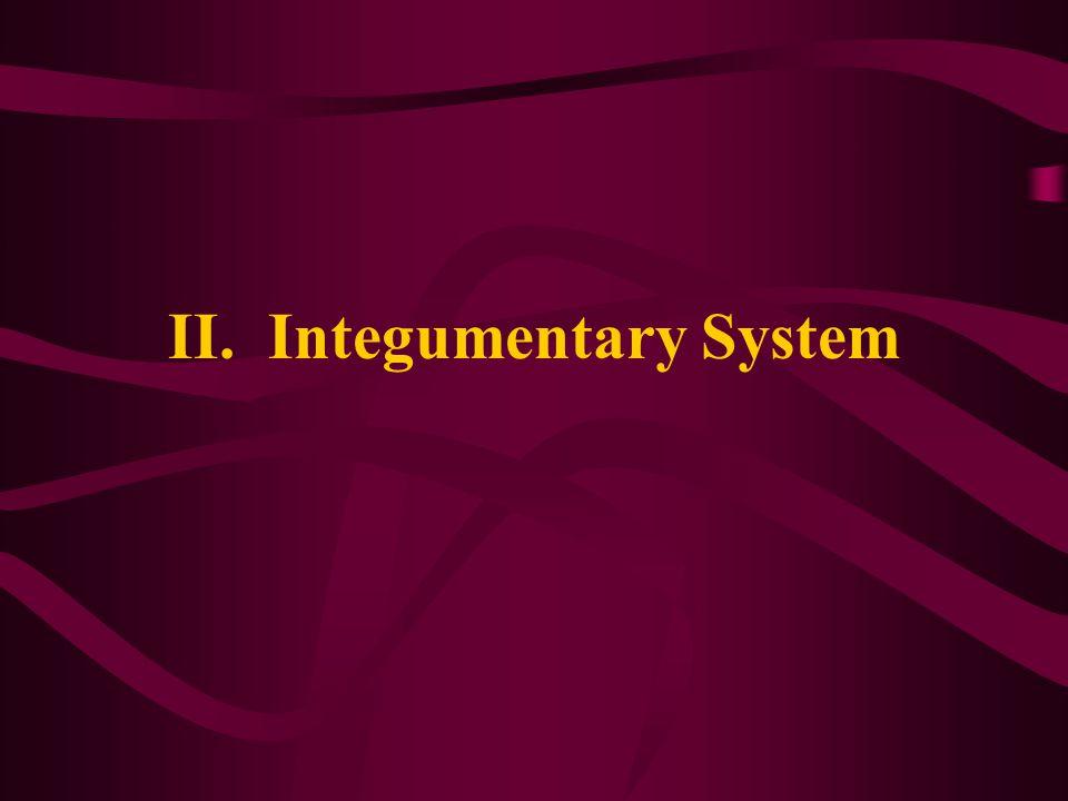 II. Integumentary System