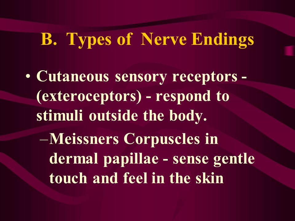 B. Types of Nerve Endings