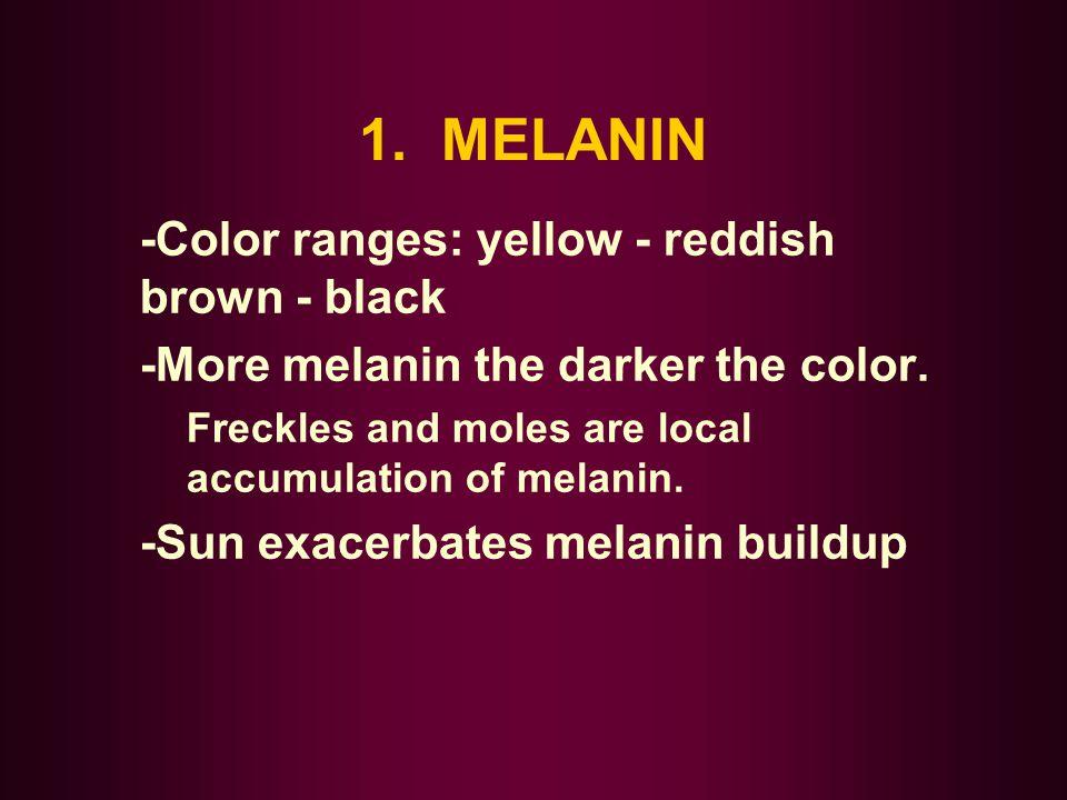 1. MELANIN -Color ranges: yellow - reddish brown - black