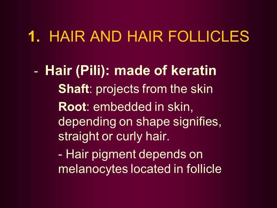 1. HAIR AND HAIR FOLLICLES