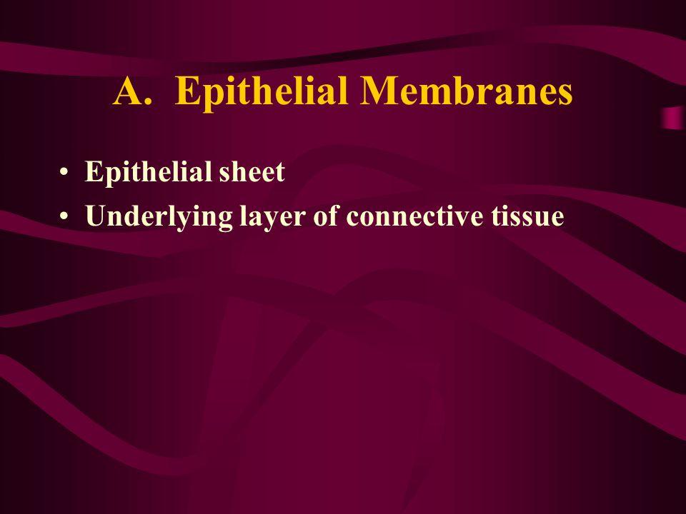 A. Epithelial Membranes