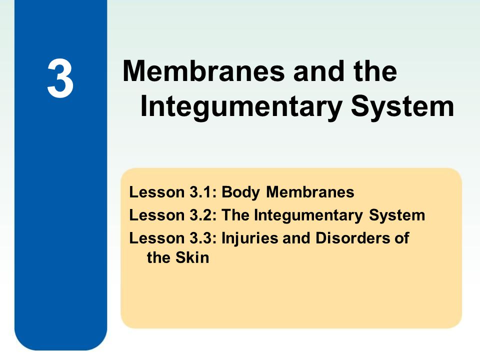 3 Membranes and the Integumentary System