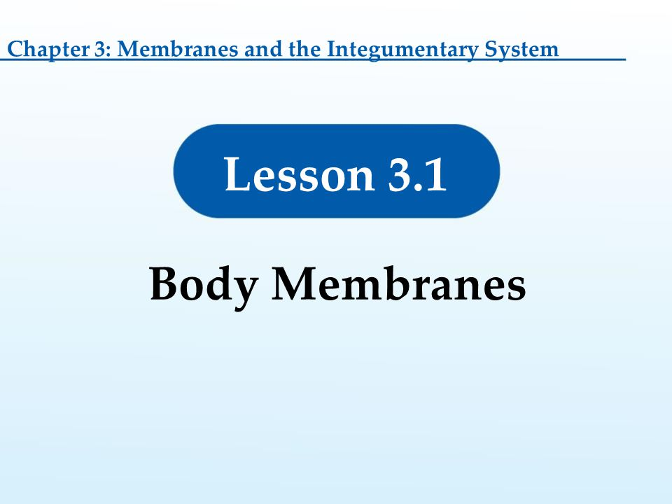 Chapter 3: Membranes and the Integumentary System