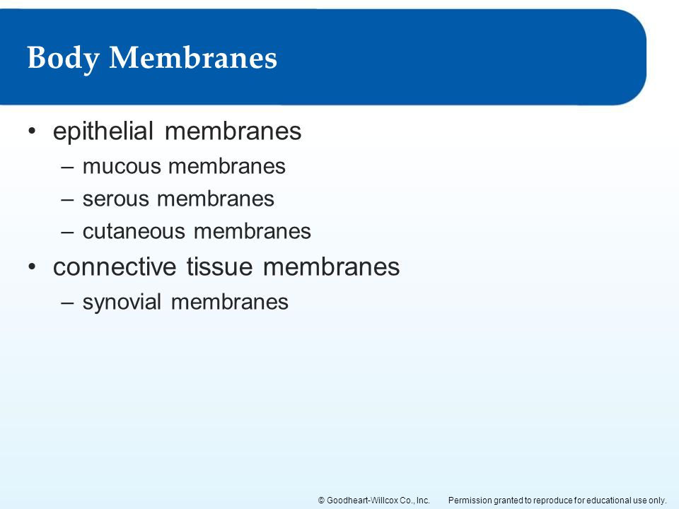 Body Membranes epithelial membranes connective tissue membranes