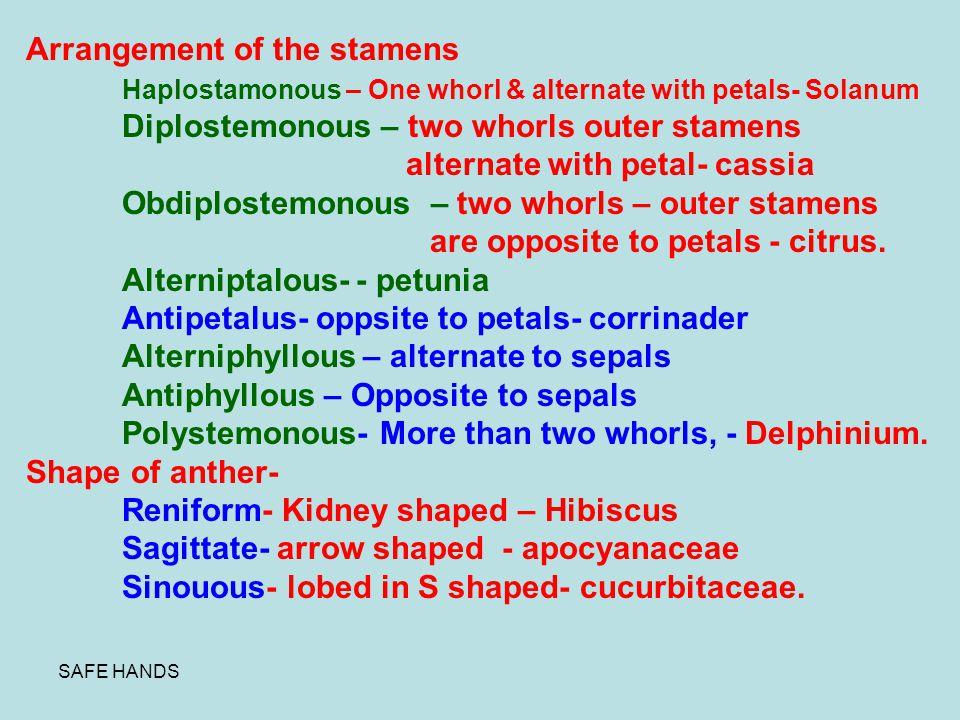 Arrangement of the stamens