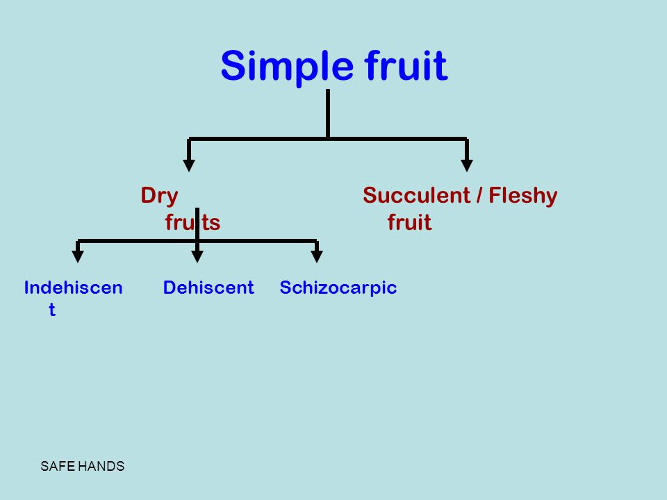Simple fruit Dry fruits Succulent / Fleshy fruit Indehiscent Dehiscent