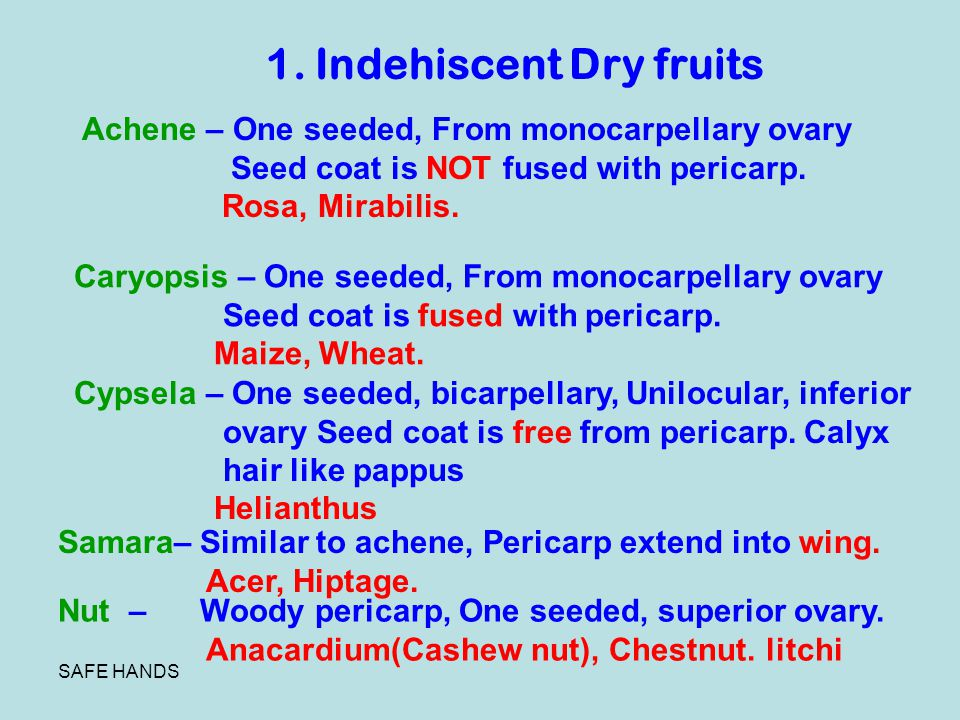 1. Indehiscent Dry fruits