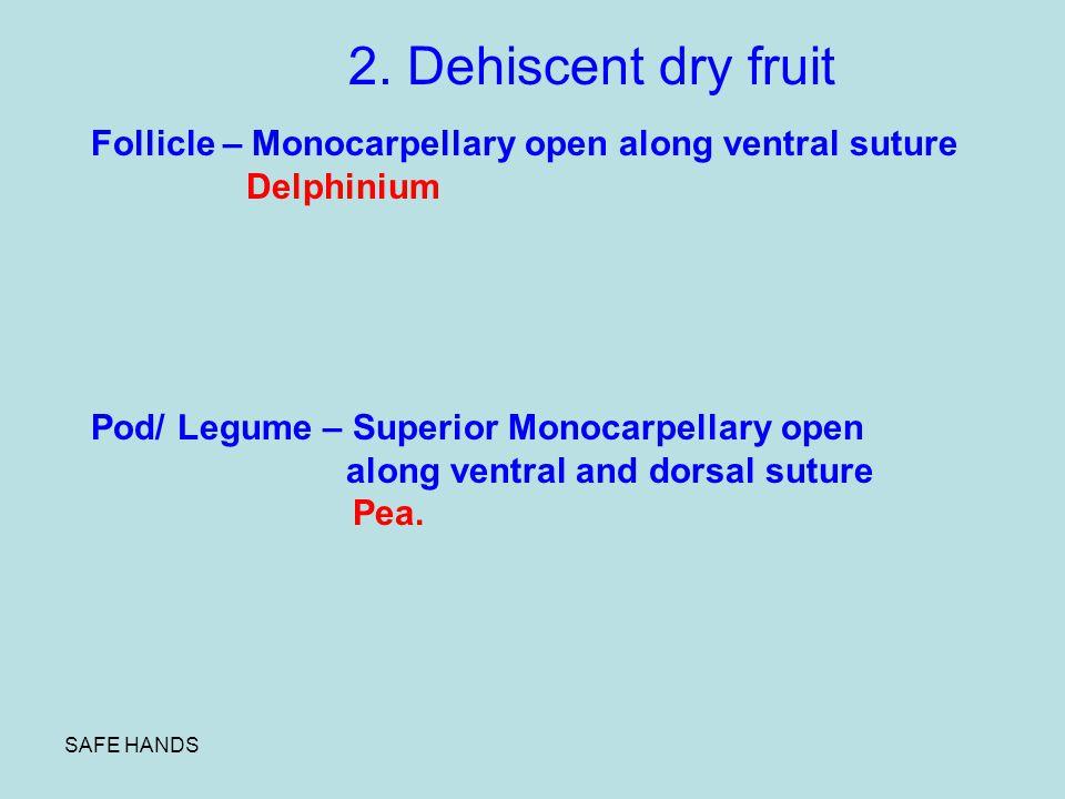 2. Dehiscent dry fruit Follicle – Monocarpellary open along ventral suture. Delphinium. Pod/ Legume – Superior Monocarpellary open.