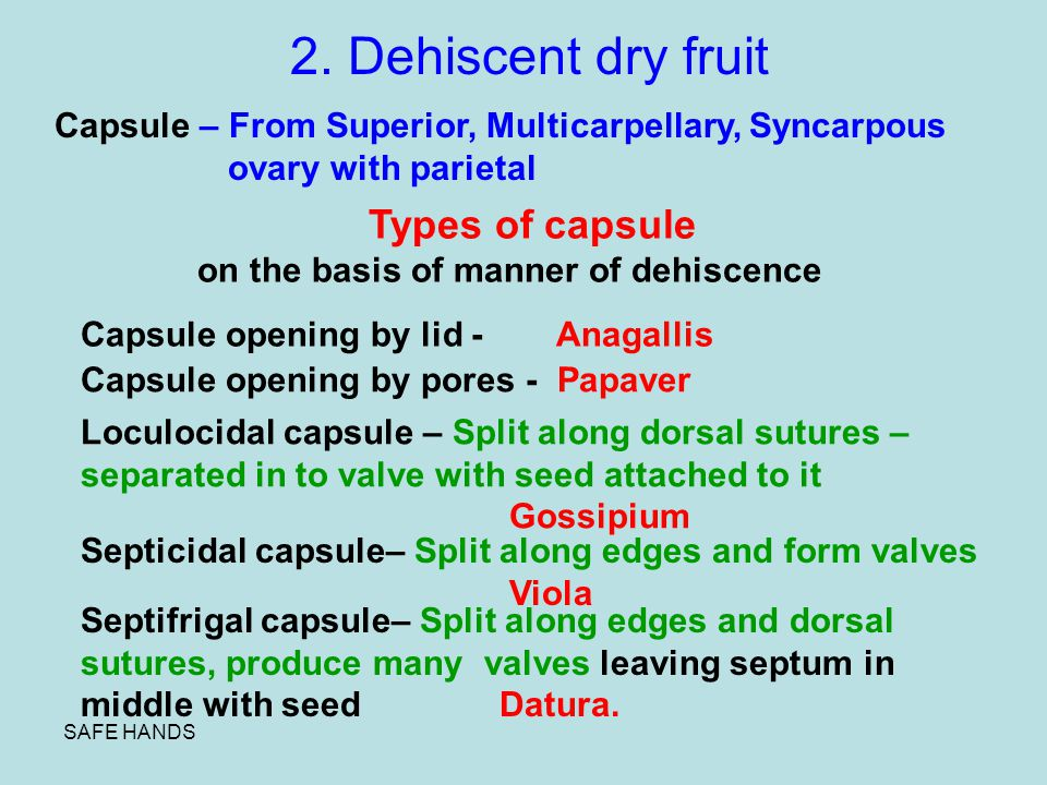 2. Dehiscent dry fruit Capsule – From Superior, Multicarpellary, Syncarpous. ovary with parietal. Types of capsule.