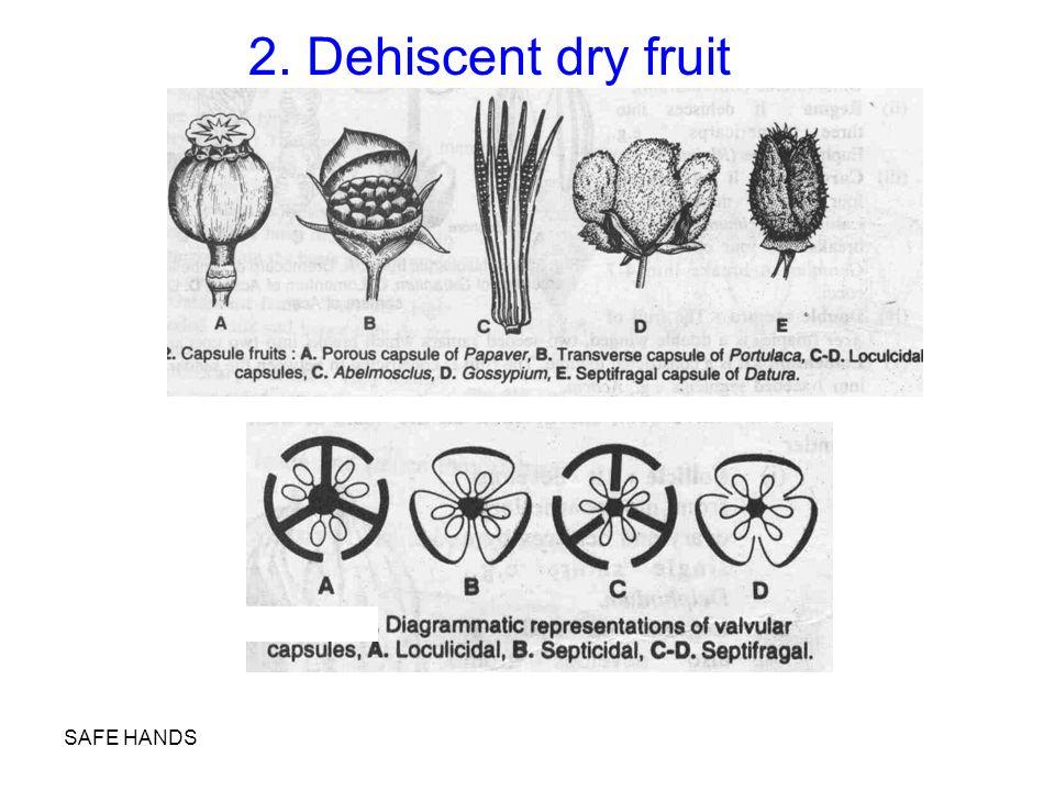 2. Dehiscent dry fruit SAFE HANDS