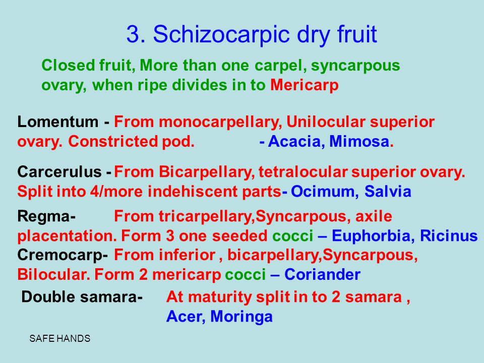3. Schizocarpic dry fruit