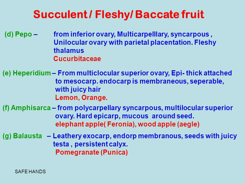 Succulent / Fleshy/ Baccate fruit