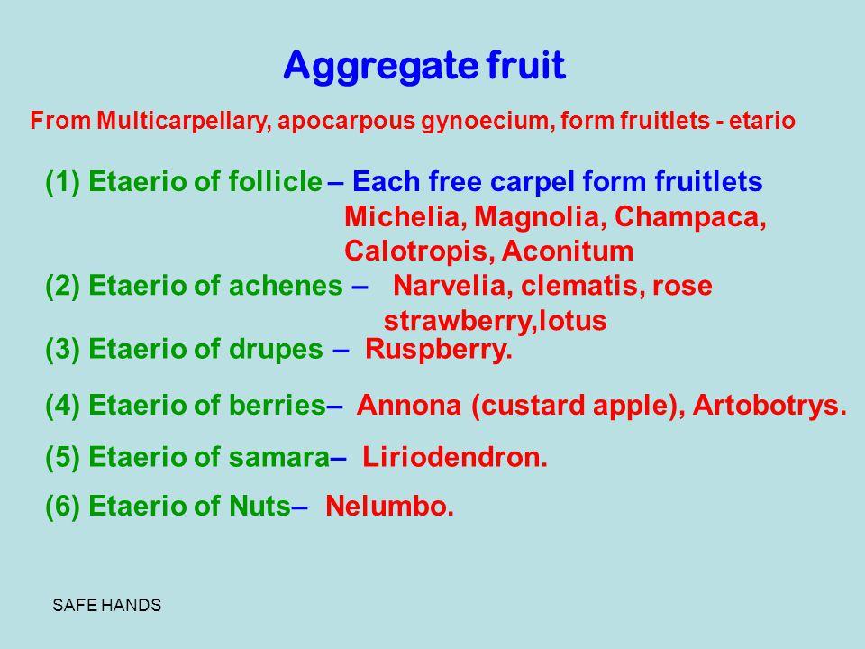 Aggregate fruit From Multicarpellary, apocarpous gynoecium, form fruitlets - etario. (1) Etaerio of follicle – Each free carpel form fruitlets.