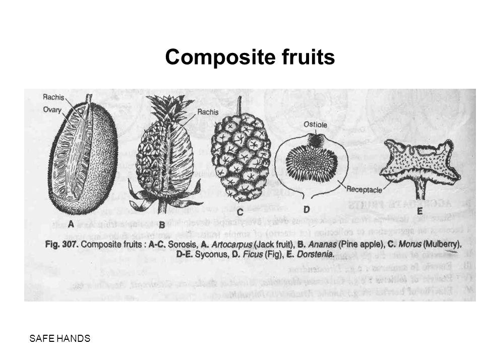 Composite fruits SAFE HANDS