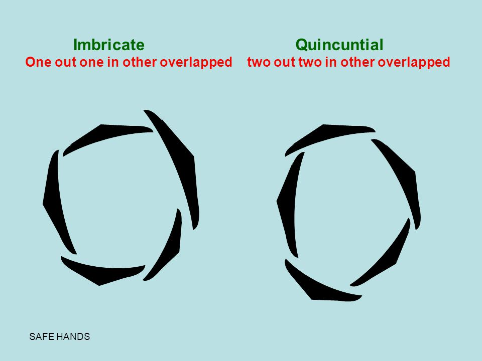 Imbricate Quincuntial One out one in other overlapped