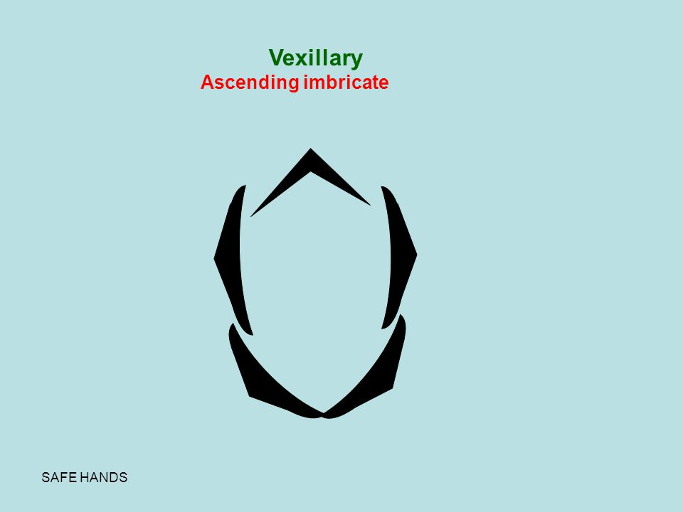 Vexillary Ascending imbricate c c c SAFE HANDS