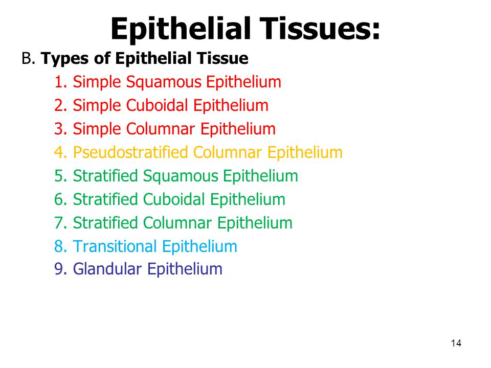 Epithelial Tissues:
