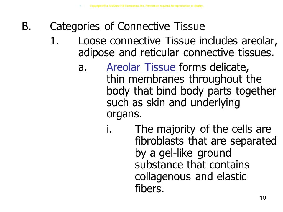 B. Categories of Connective Tissue