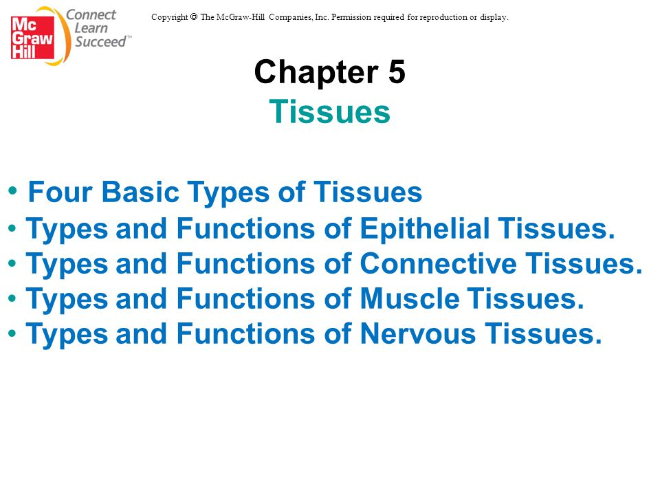 Four Basic Types of Tissues