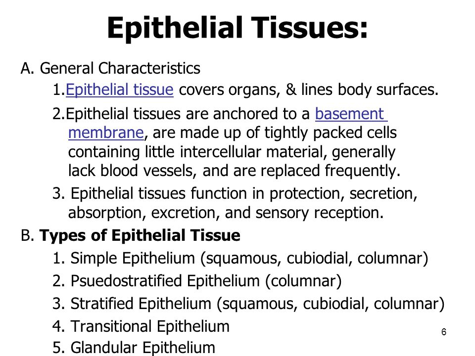 Epithelial Tissues: A. General Characteristics