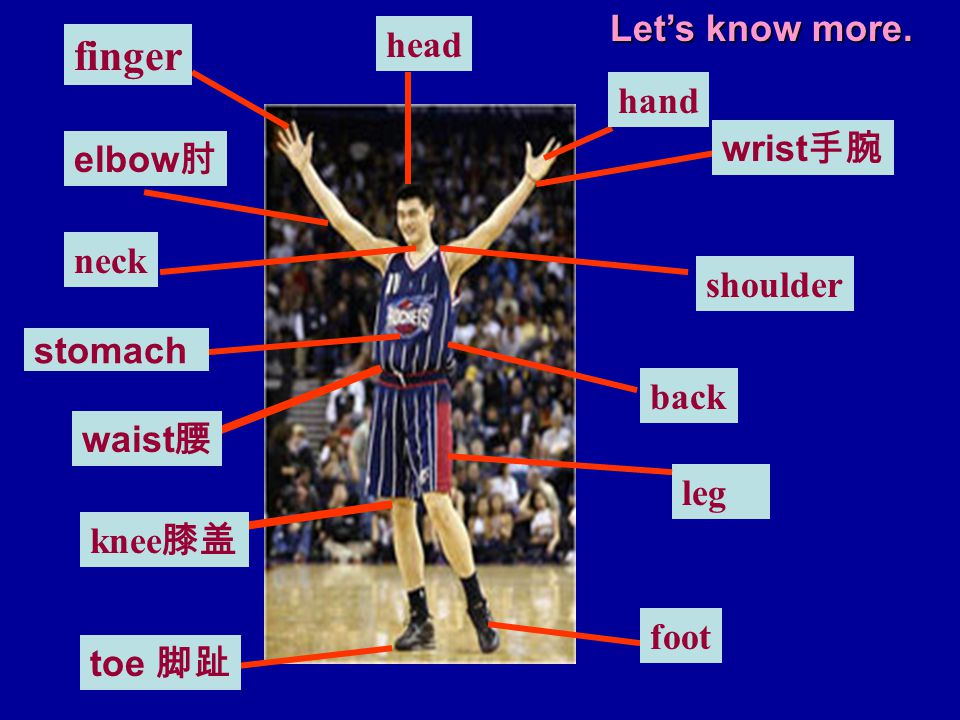 finger Let's know more. head hand wrist手腕 elbow肘 neck shoulder stomach