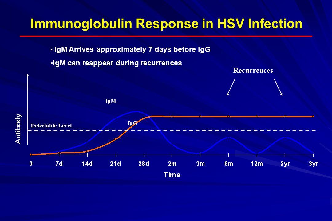 Immunoglobulin Response in HSV Infection