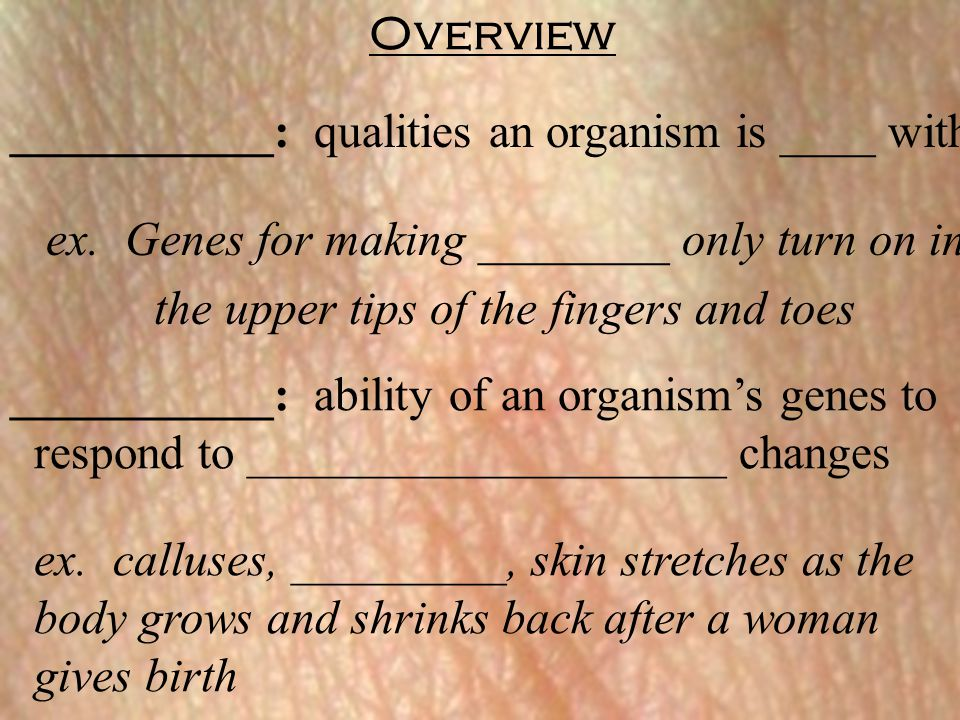 Overview ___________: qualities an organism is ____ with. ex. Genes for making ________ only turn on in.