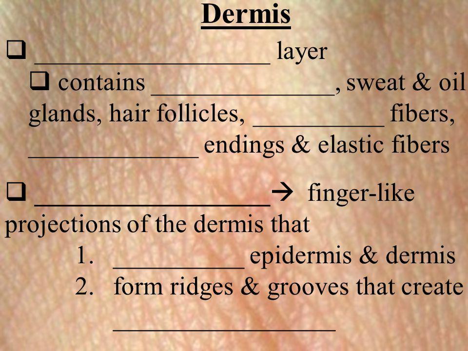 Dermis __________________ layer