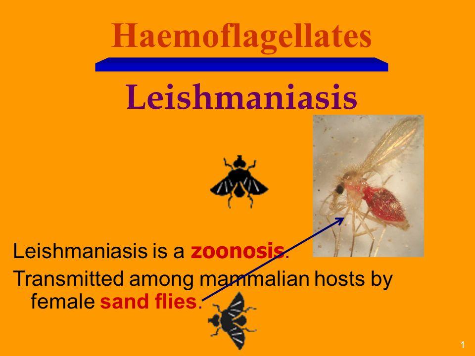 Haemoflagellates Leishmaniasis Leishmaniasis is a zoonosis.