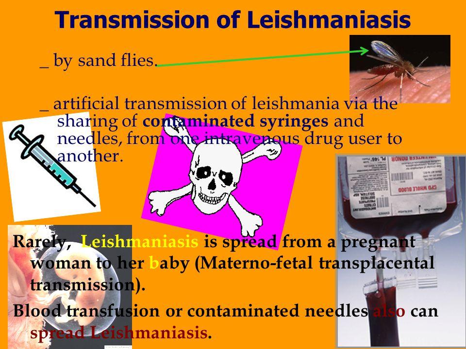 Transmission of Leishmaniasis