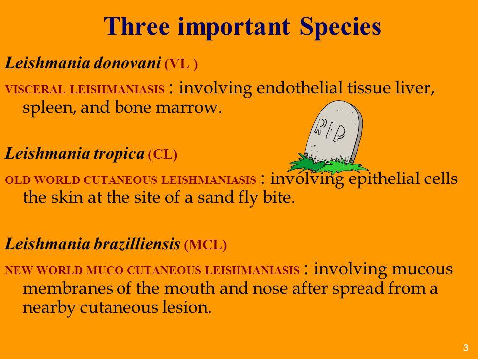 Three important Species