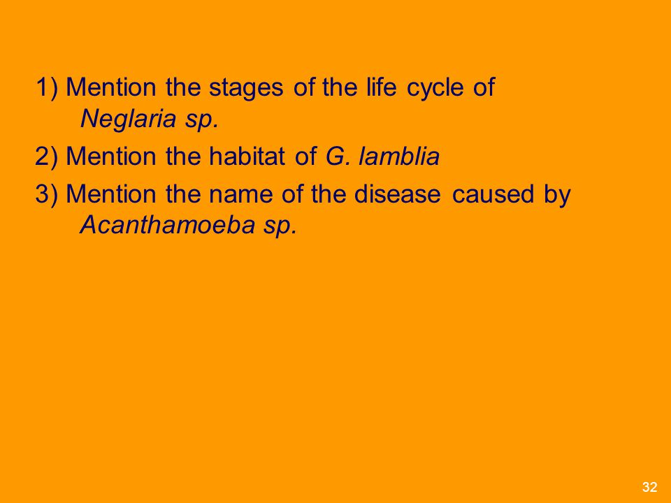 1) Mention the stages of the life cycle of Neglaria sp.