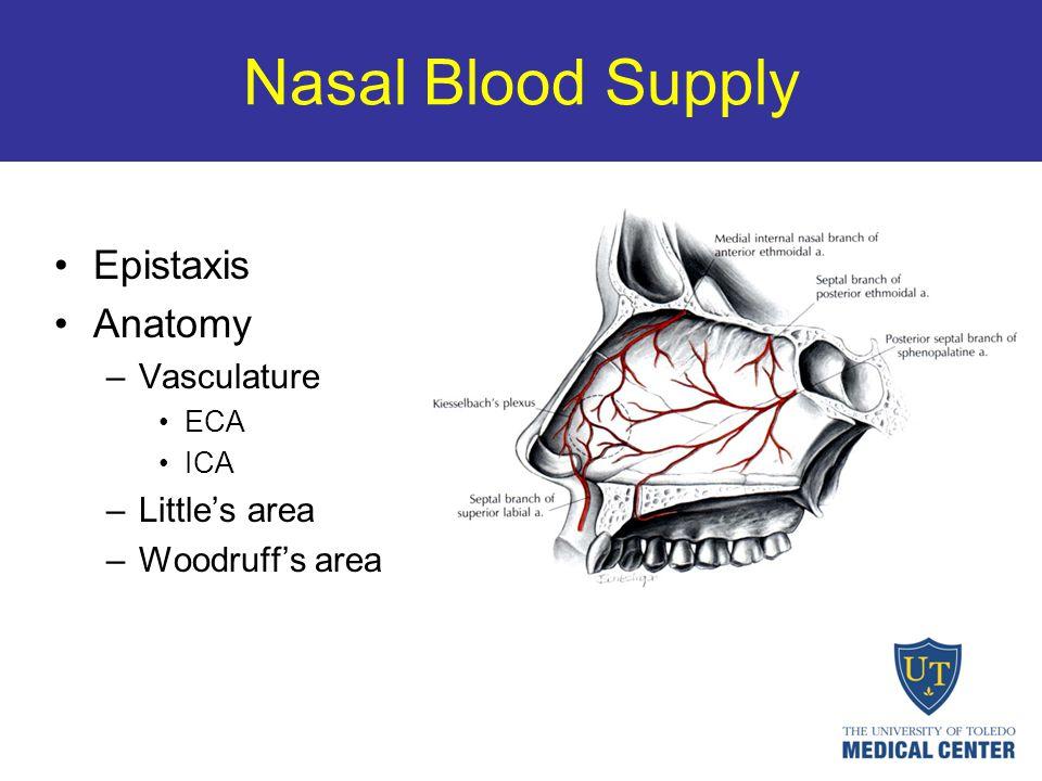 Nasal Blood Supply Epistaxis Anatomy Vasculature Little's area