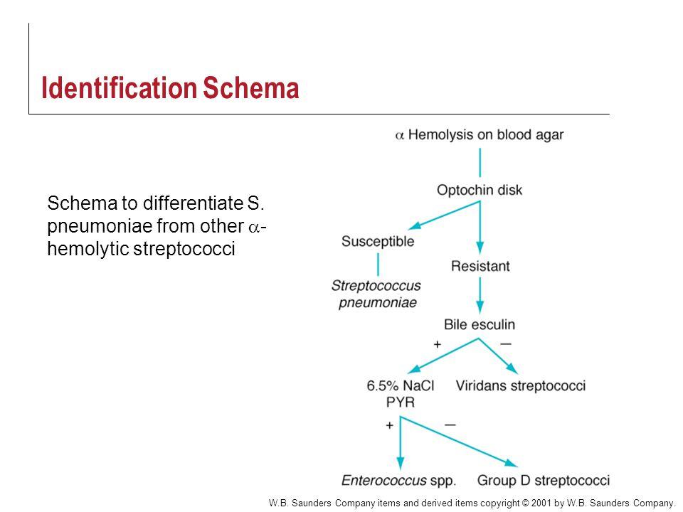 Identification Schema