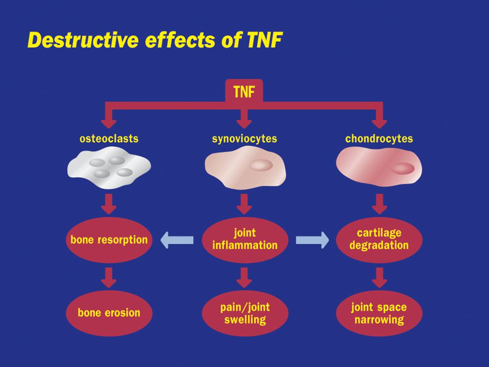 Destructive effects of TNF